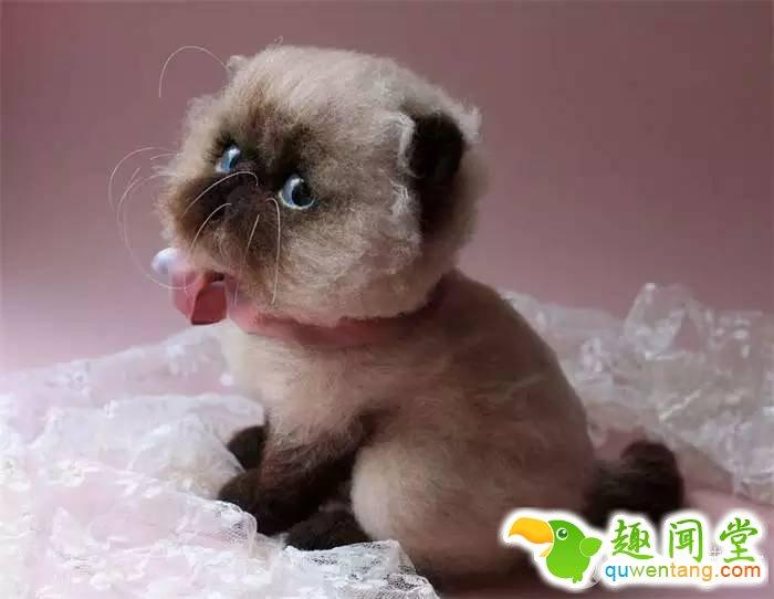 看到这么可爱的动物超想养一只 可惜是绒毛娃娃
